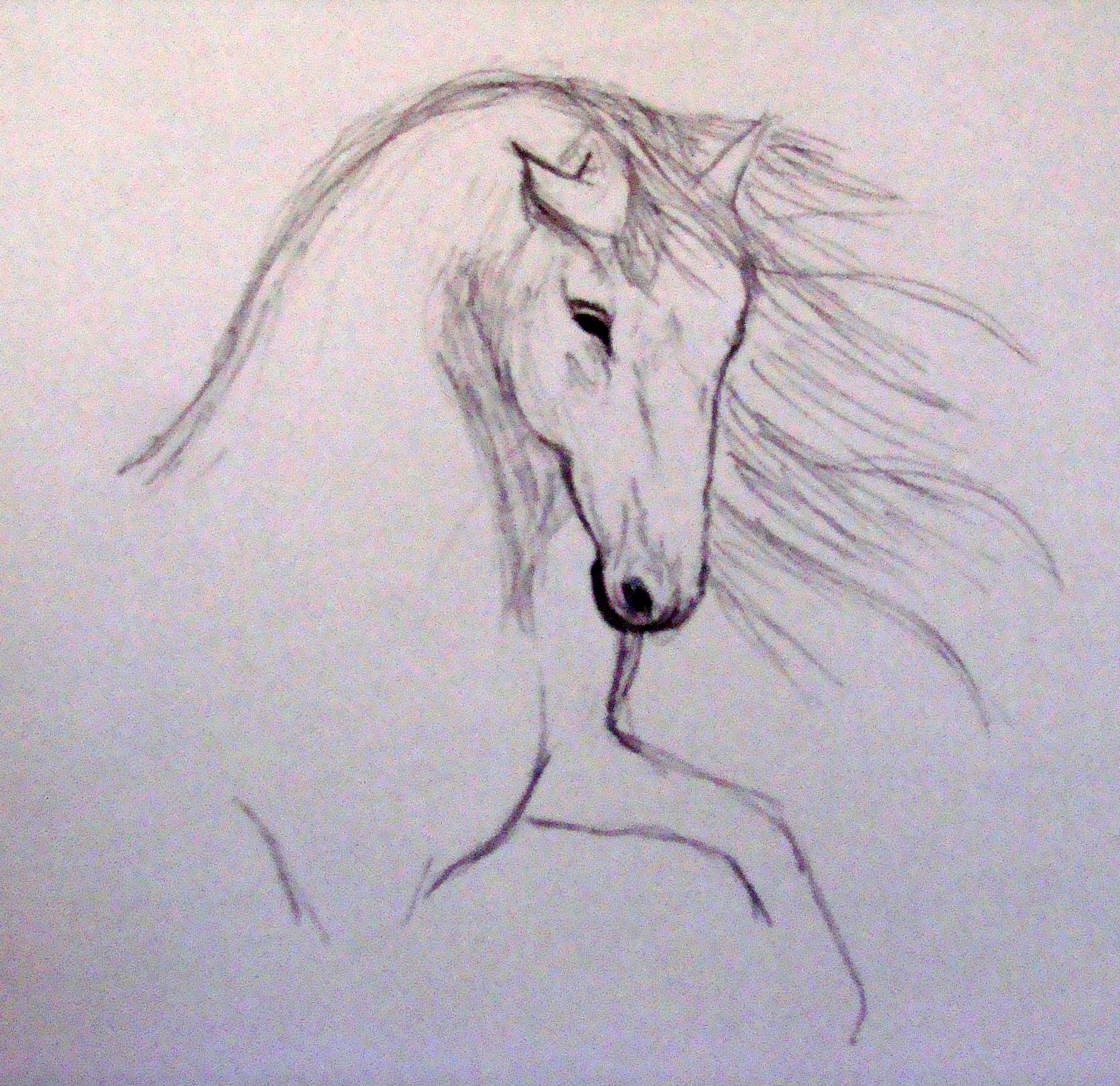 Croquis white horse