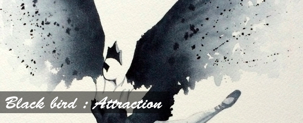 Black bird : Attraction