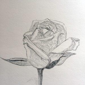 Croquis_Rose